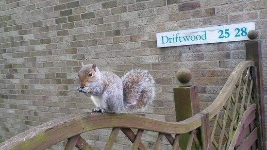 Warner Leisure Hotels Gunton Hall Coastal Village : squirrel