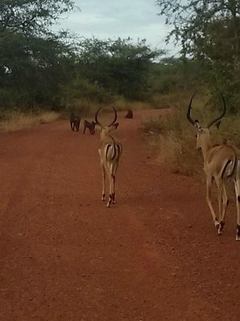 Akagera Game Lodge: On road in