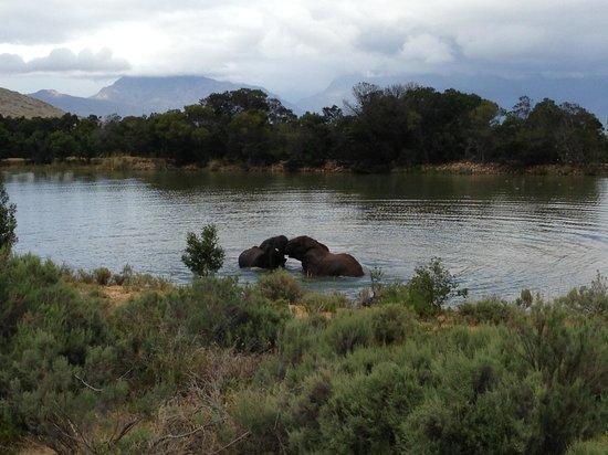 Fairy Glen Private Game Reserve: 5