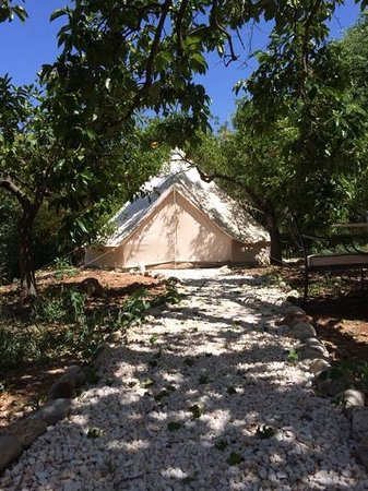 Casa de Laila | Glamping & Retreats: bell tent in the orange grove