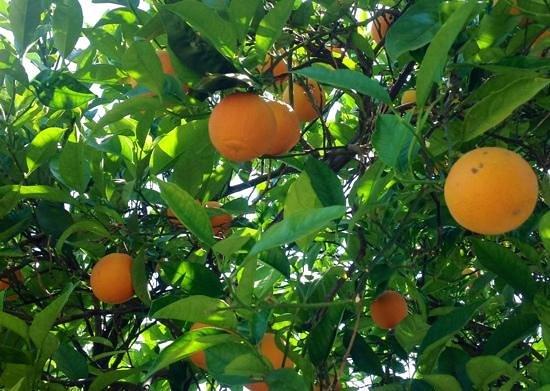 Casa de Laila | Glamping & Retreats: orange tree