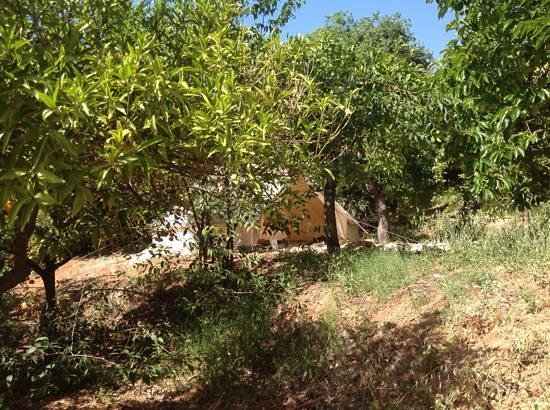 Casa de Laila | Glamping & Retreats: hidden bell tent