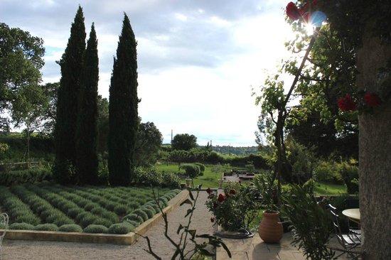 Mas Laurent : vue de la cours / l'espace Lavande - La piscine est à gauche ...