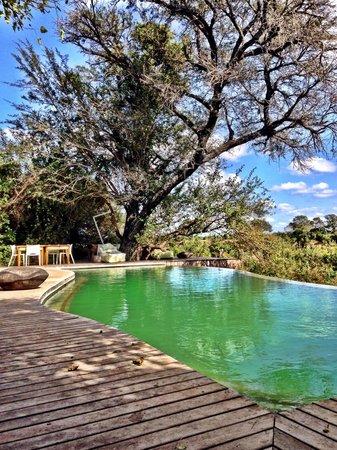 andBeyond Ngala Tented Camp: Infinity pool com essa vista linda
