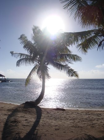 Belizean Shores Resort: Palms and sun!