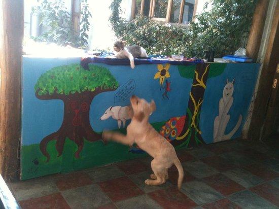 Casa Caracol Hostel: meow y lola playing