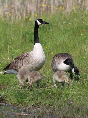 Rising Sun Country Park: proud parents