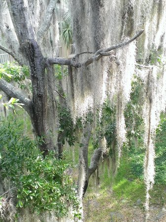 Wyndham Garden Gainesville: The Spanish moss