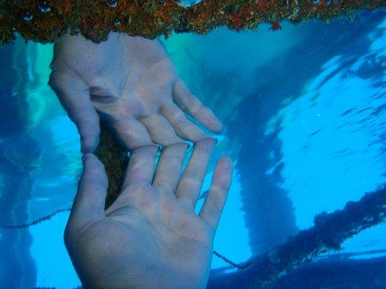 Nautilus Scuba: Konanda Wreck