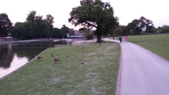Cannon Hill Park: More from the park