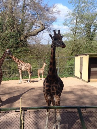 Dudley Zoo and Castle : Beautiful
