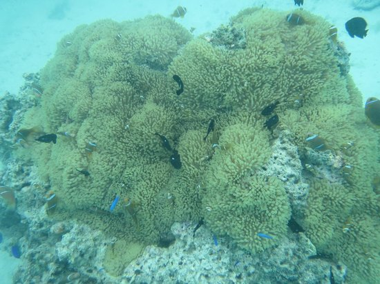 Pure Snorkeling by Reef Discovery: We found NEMO