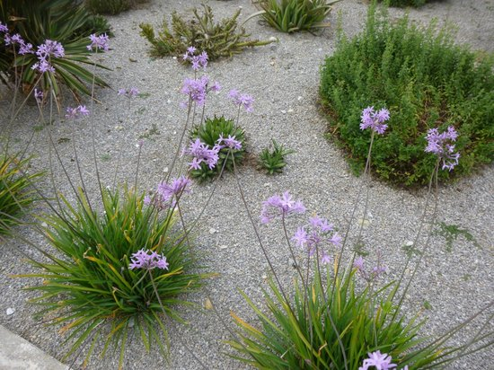 Elli Beach: BEACHFRONT GRAVEL GARDEN
