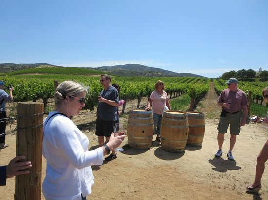 On The Tour Picture Of Temecula Valley Jeep Amp Wine Tours