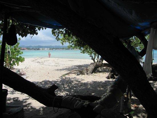 Booby Cay Island: Cute