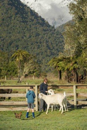 Glenfern Villas Franz Josef: Farmlet