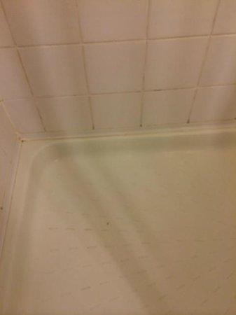 Hotel Ibis Warszawa Ostrobramska : Moldy shower