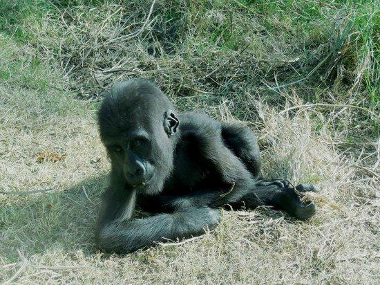 Safari Park: Все гармонично,как в естественной среде