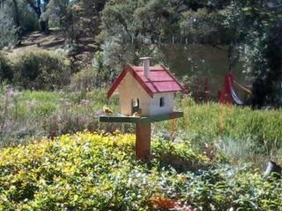 Alas de La Sierra : Casa de Passarinhos (com passarinhos!!!)