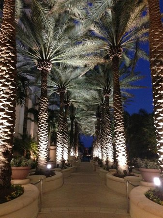 Loews Miami Beach Hotel : The walk to the beach after dark - beautiful.