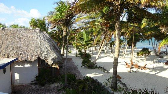 Playa Sonrisa: VIEW FROM MY ROOM