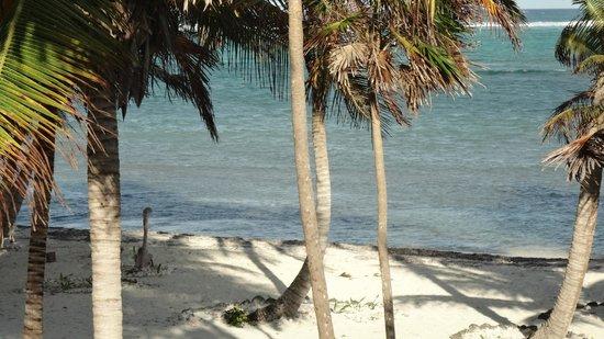 Playa Sonrisa: WATER ZOOM IN