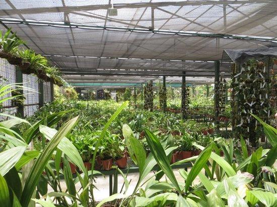 Lankester Botanical Gardens Picture Of Jardin Botanico Lankester Cartago Tripadvisor