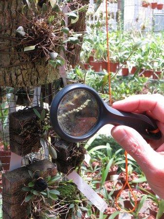 Jardin Botanico Lankester: Getting down to detail