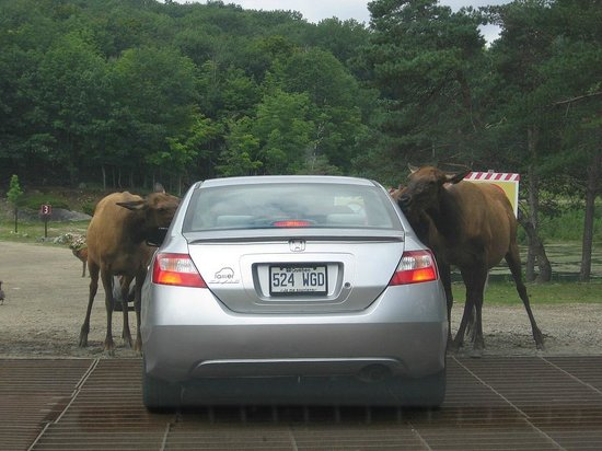 Omega Park: Hey - can we get a ride?
