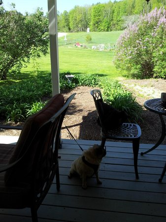 The Paw House Inn: Porch view onto the agility park