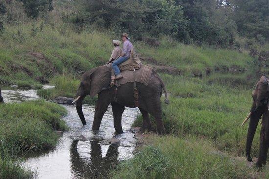 Wild Horizons Gorge Swing, Highwire & Adventure Slides: Elephant-back safari