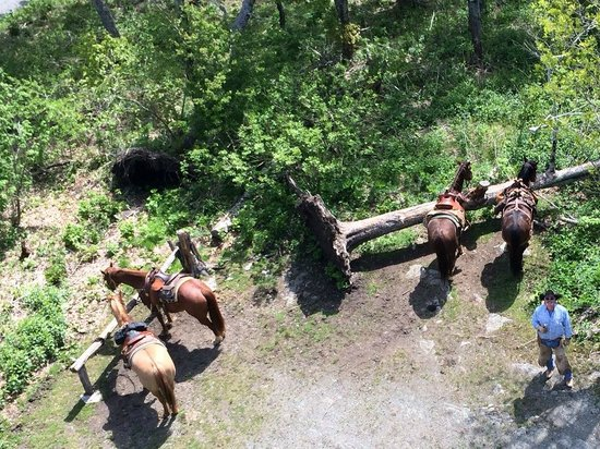Vx3 Trail Rides : Looking down from fire tower at Tim and our horses