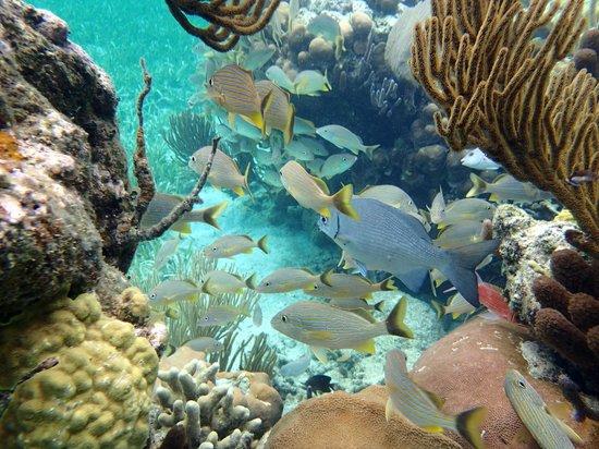 Hobbies Hideaway : on the reef