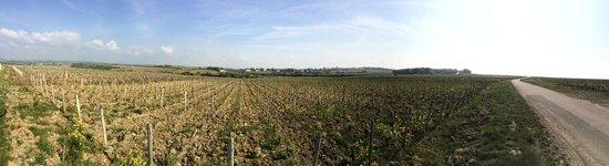 Paris Wine Day Tours: Vineyard panarama
