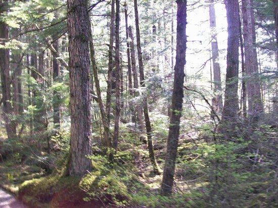 Juneau Rainforest Garden: rainforest