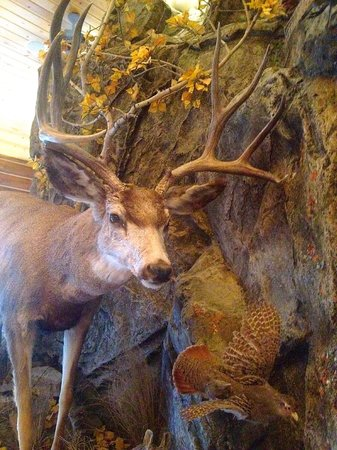 Bar N Ranch Restaurant: Dinner Guests . . . .you'll see!