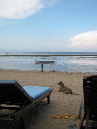Luhtu's Coffee Shop: View of the beach