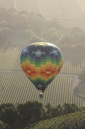 Napa Valley Balloons, Inc. : Vineyards as far as one can see...