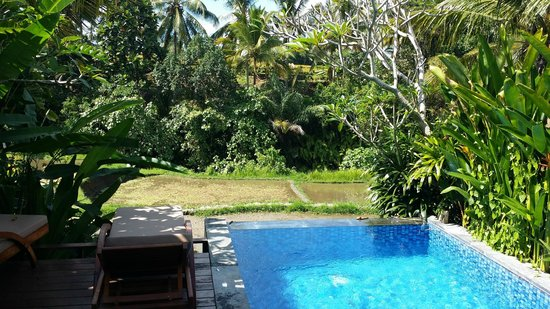 Ubud Green : View from Villa overlooking pool over the Ubud landscape