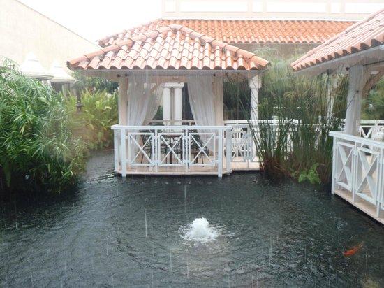 Gran Melia Golf Resort Puerto Rico : Coi Pond