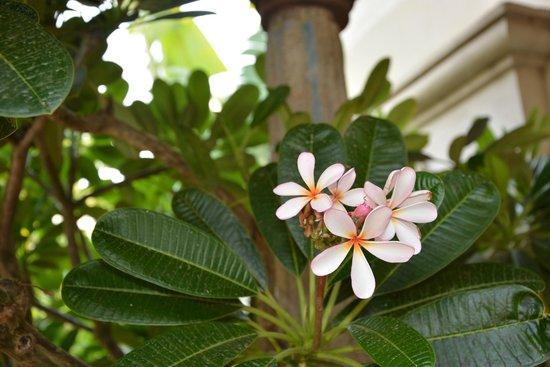 Aalankrita Resort: More flora :)