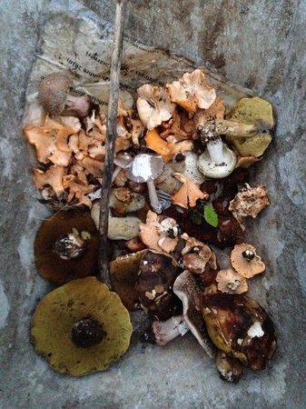 Centro di Educazione Ambientale Serra Guarneri: Mushrooms foraged for dinner.