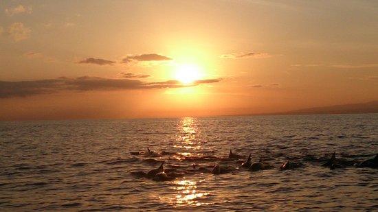 Bali Nibbana Resort : イルカの群れ