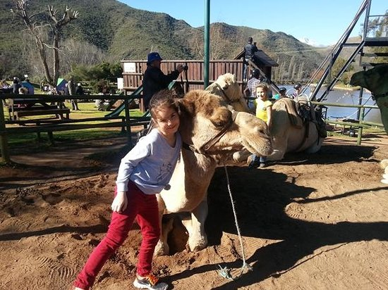 Wilgewandel Holiday Farm: Camels