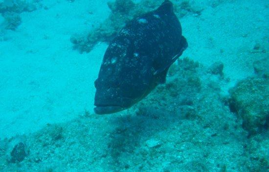 Diving Centre Blue Dolphin : Underwater inhabitant