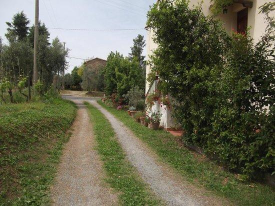 Cillieri - Casina Nova : Drive way from the road to Volterra