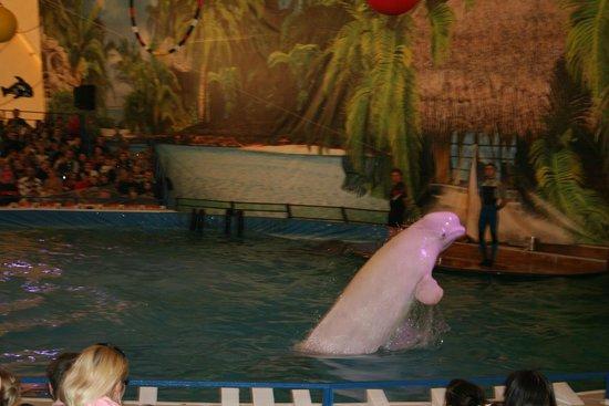 Dolphinarium Dolphin World