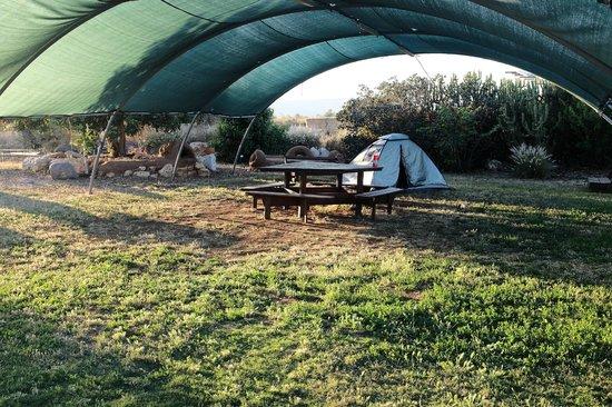 Yarok Az Organic Goat Farm: i build my first tent in here, it was fun!