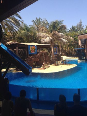 TUI MAGIC LIFE Fuerteventura: Oasis park sealion show Twenty minutes from club magic life This is a great family day out