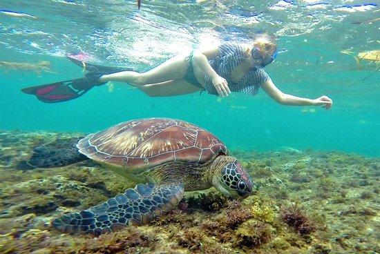 Atmosphere Resort: Snorkeling in Apo Island © Sabrina Iovino | JustOneWayTicket.com